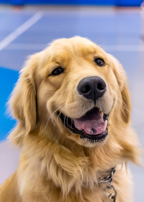 The event's warm intent is embodied in the welcoming temperament of Winnie, a golden retriever owned by Drew R. Potts, assistant professor of civil engineering technology.
